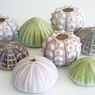 LARGE ASSORTED SHELLS